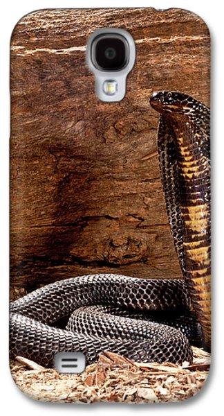 Pakistani Black Cobra, Naja Naja Galaxy S4 Case