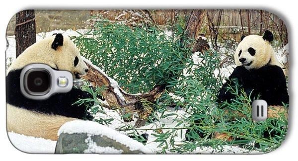 Panda Bears In Snow Galaxy S4 Case