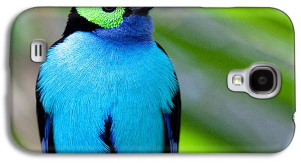 Paradise Tanager Galaxy S4 Case