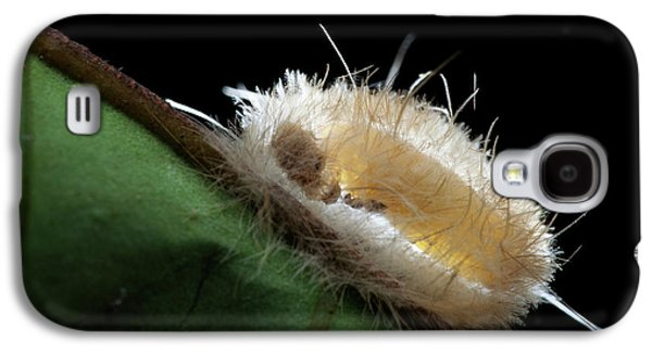 Parasitic Wasp On Cocoon Galaxy S4 Case by Melvyn Yeo