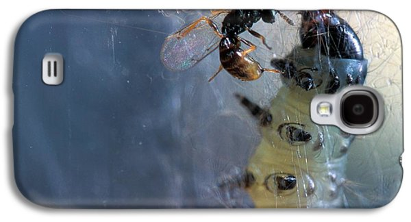 Parasitic Wasp On Leafroller Larva Galaxy S4 Case by Stephen Ausmus/us Department Of Agriculture