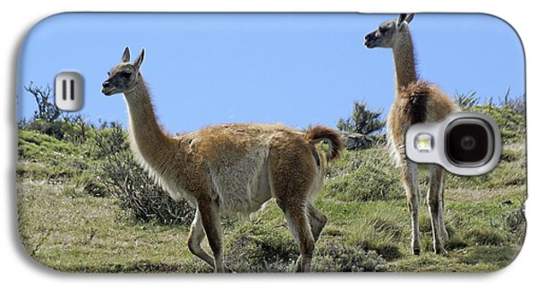 Patagonian Guanacos Galaxy S4 Case by Michele Burgess