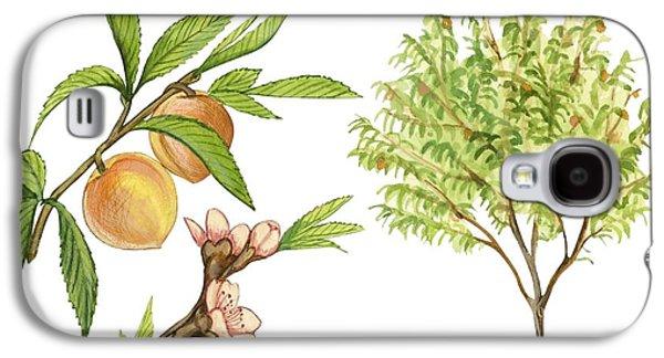 Peach Tree Galaxy S4 Case