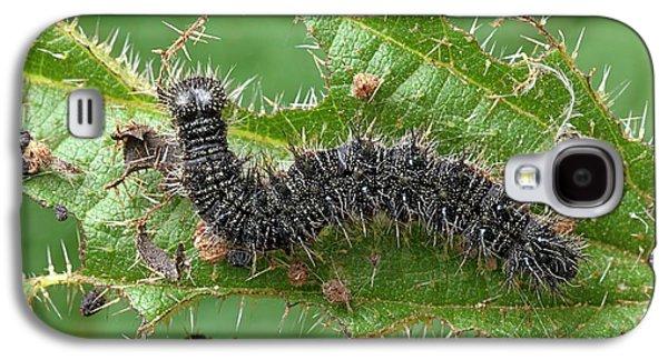 Peacock Butterfly Caterpillar Galaxy S4 Case by Alex Hyde