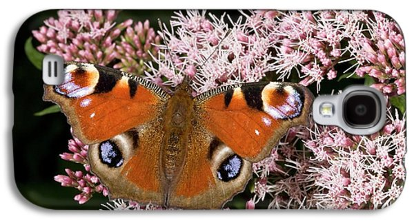 Peacock Butterfly On Hemp Agrimony Galaxy S4 Case by Bob Gibbons