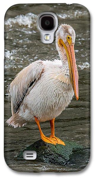 Pelican On A Rock Galaxy S4 Case by Paul Freidlund