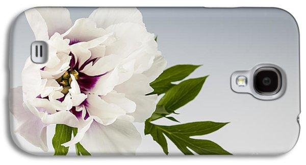 Peony Flower On Gray Galaxy S4 Case by Elena Elisseeva