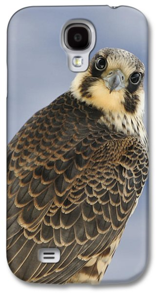 Peregrine Falcon Looking At You Galaxy S4 Case