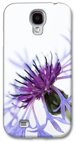 Perennial Cornflower Galaxy S4 Case by Anne Gilbert