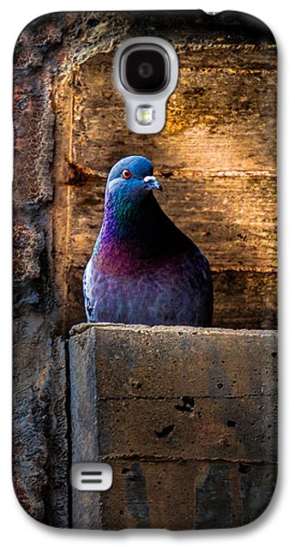 Pigeon Of The City Galaxy S4 Case by Bob Orsillo