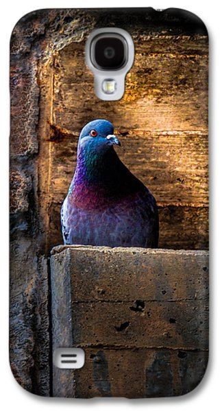 Pigeon Of The City Galaxy S4 Case
