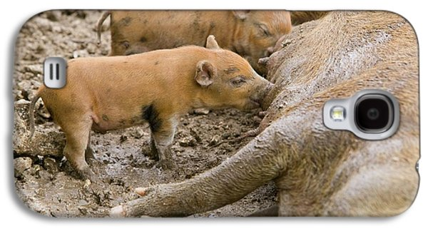 Pigs Reared For Pork On Tuvalu Galaxy S4 Case