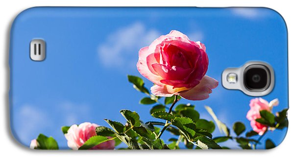 Rose Galaxy S4 Case - Pink Roses - Featured 3 by Alexander Senin