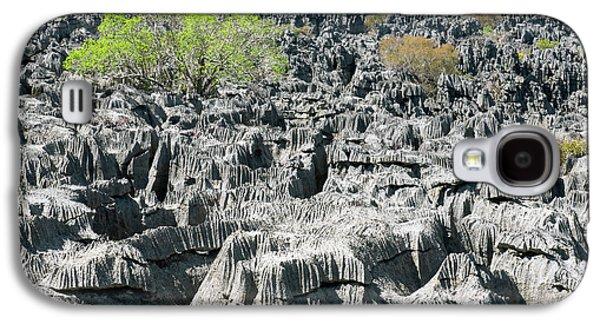 Plants Growing On Limestone Rocks Galaxy S4 Case