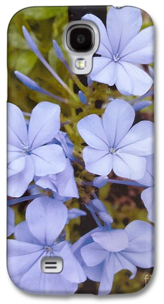 Plumbago Auriculata Or Cape Wort Galaxy S4 Case by Rod Ismay