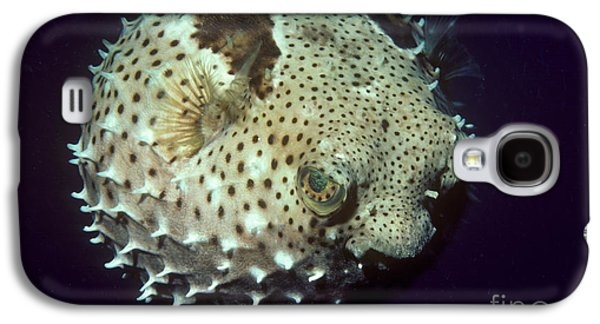Porcupinefish Galaxy S4 Case