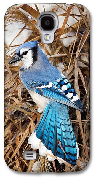 Portrait Of A Blue Jay Galaxy S4 Case by Bill Wakeley