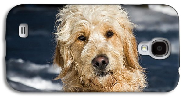 Portrait Of A Goldendoodle Sitting Galaxy S4 Case by Zandria Muench Beraldo