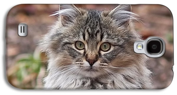 Portrait Of A Maine Coon Kitten Galaxy S4 Case