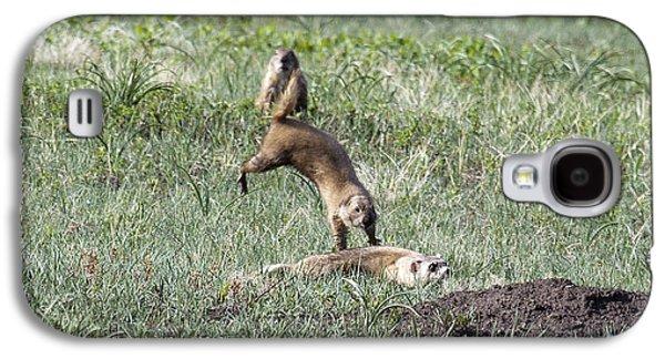 Prairie Dog Ferret Fight Galaxy S4 Case by Sandy Nervig