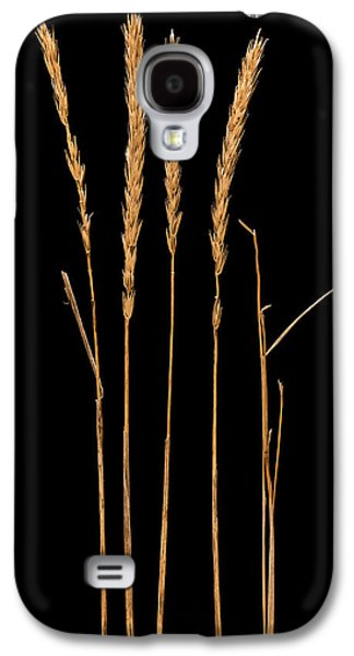 Prairie Grass Number 2 Galaxy S4 Case by Steve Gadomski