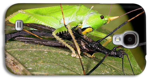 Predatory Katydid Eating A Stick Insect Galaxy S4 Case by Dr Morley Read