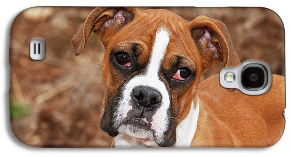 Purebred Boxer, Head And Back Galaxy S4 Case
