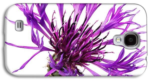 Purple Cornflower Galaxy S4 Case by Jo Ann Snover