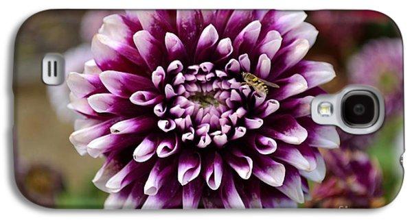 Purple Dahlia White Tips Galaxy S4 Case