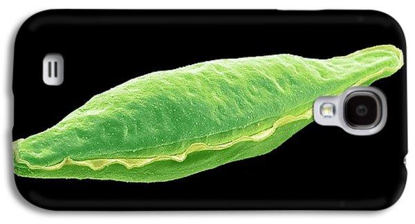 Pyrocystis Fusiformis Dinoflagellate Galaxy S4 Case