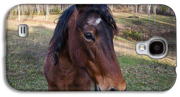 Quarter Horse Close Up Galaxy S4 Case