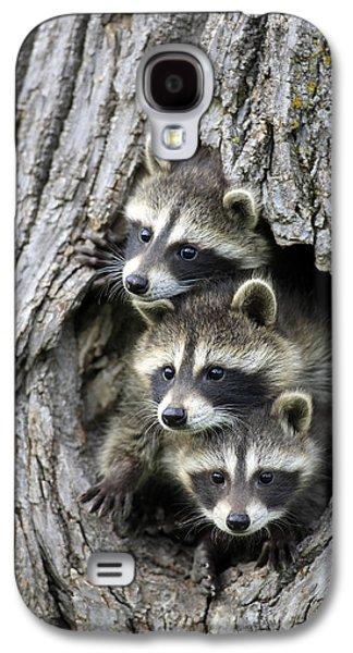 Raccoon Trio At Den Minnesota Galaxy S4 Case