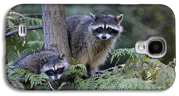 Raccoons In Stanley Park Galaxy S4 Case by Maria Angelica Maira