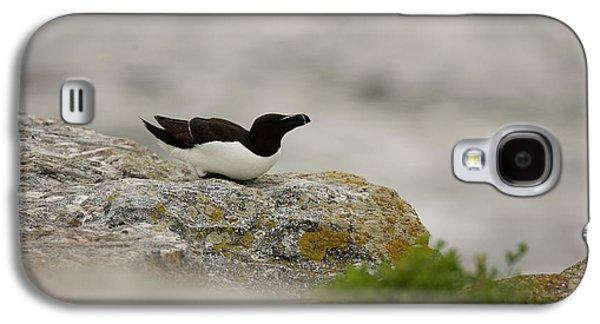 Razorbill Galaxy S4 Case - Razorbill Alca Torda, A Big Diving Bird by Jose Azel