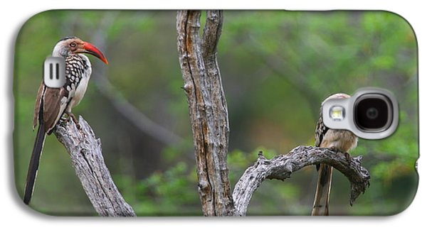 Red-billed Hornbills Galaxy S4 Case by Bruce J Robinson