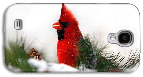 Red Cardinal Galaxy S4 Case