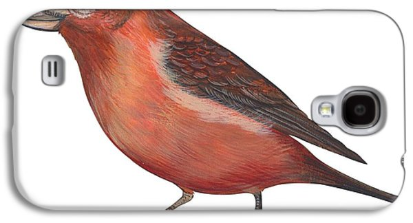 Crossbill Galaxy S4 Case - Red Crossbill by Anonymous