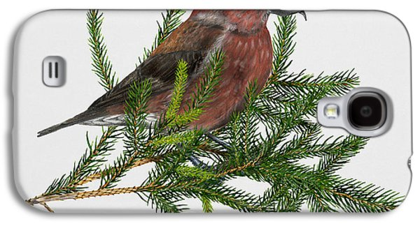 Red Crossbill -common Crossbill Loxia Curvirostra -bec-crois Des Sapins -piquituerto -krossnefur  Galaxy S4 Case