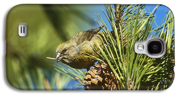 Crossbill Galaxy S4 Case - Red Crossbill Eating Cone Seeds by Paul J. Fusco