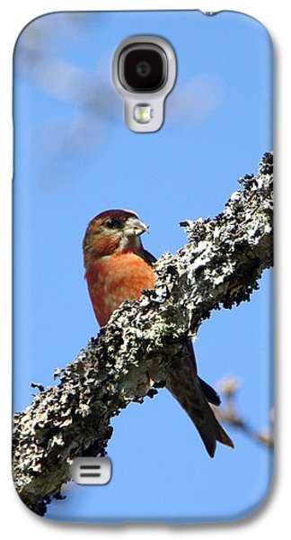 Crossbill Galaxy S4 Case - Red Crossbill Finch by Marilyn Wilson