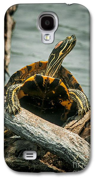 Slider Photographs Galaxy S4 Cases - Red Eared Slider Turtle Galaxy S4 Case by Robert Frederick