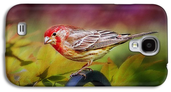 Crossbill Galaxy S4 Case - Red Finch by Darren Fisher
