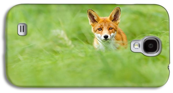 Red Fox In A Sea Of Green Galaxy S4 Case by Roeselien Raimond