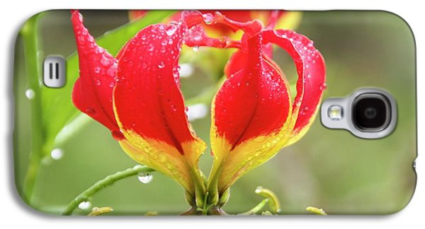 Red Gloriosa Lily Galaxy S4 Case by Photostock-israel