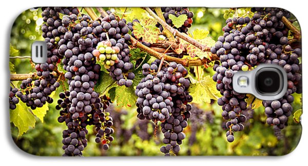 Red Grapes In Vineyard Galaxy S4 Case