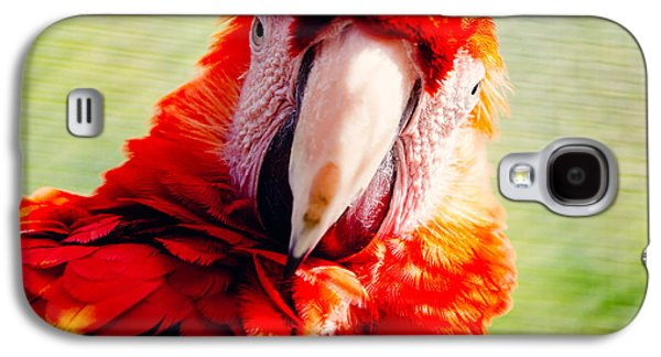 Red Macaw Galaxy S4 Case by Pati Photography