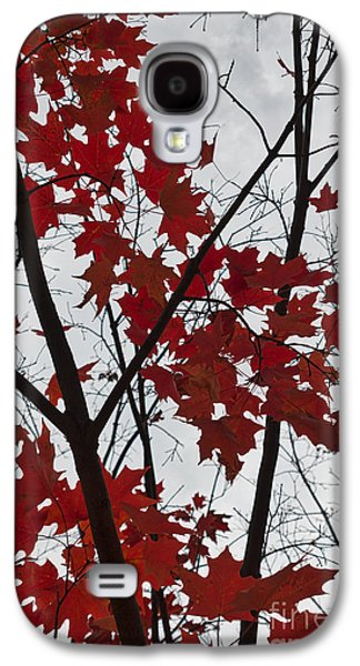Red Maple Branches Galaxy S4 Case by Ana V Ramirez