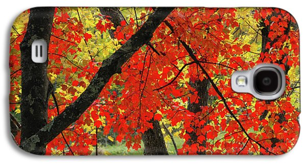 Red Maple Close-up, Sebago Lake State Galaxy S4 Case by Michel Hersen