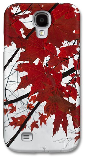 Red Maple Leaves Galaxy S4 Case by Ana V Ramirez