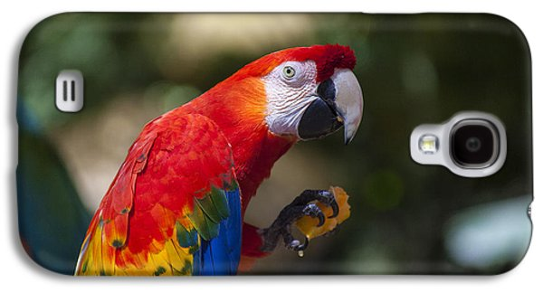 Red Parrot  Galaxy S4 Case by Garry Gay